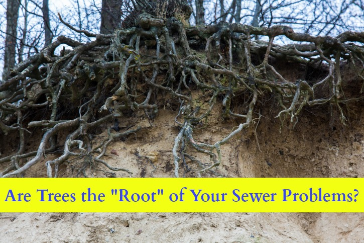tree roots and sewer problems